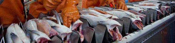 Kalatööstused